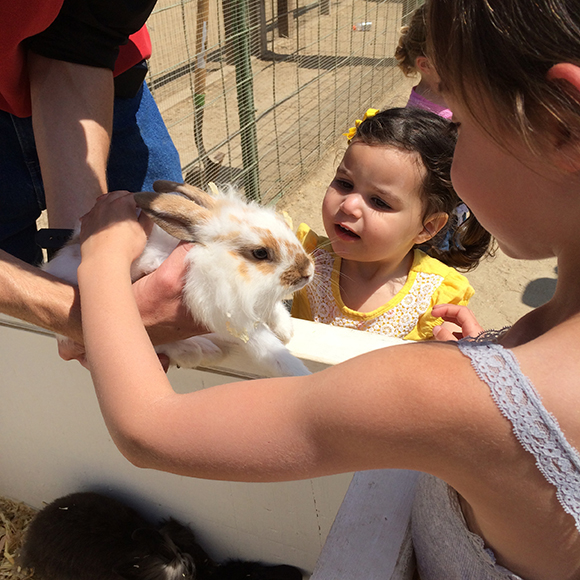 Everybunny loves the petting farm!