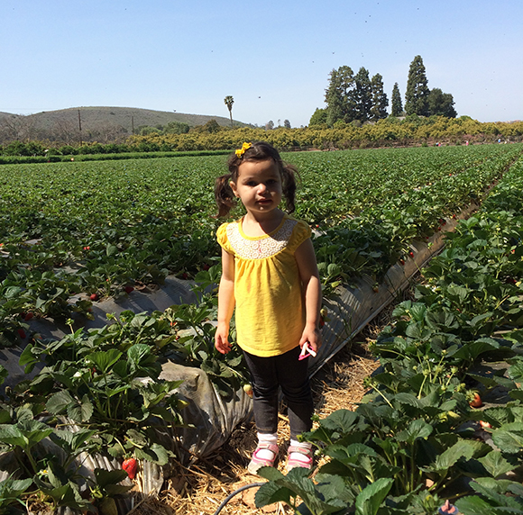Field of strawberry dreams. If you plant it, they will come. And eat them.